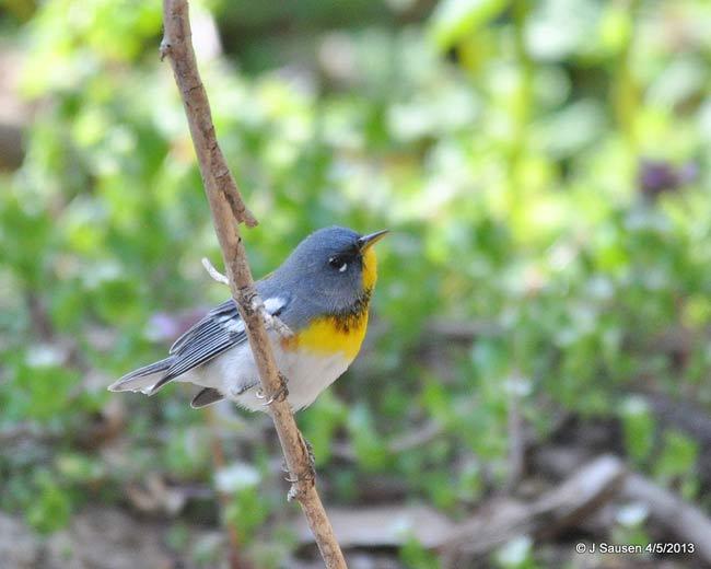 happy-bird